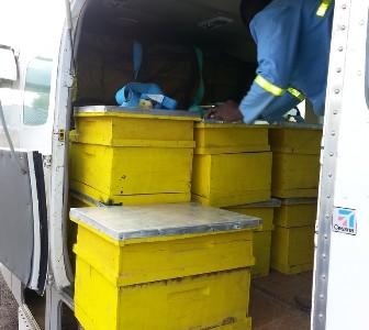 Ruches Pour Le Développement De L'apiculture